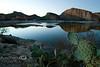 Paddle Cactus with Roosevelt Lake Behind It - Arizona 2008