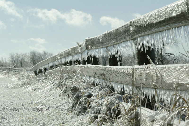 Frozen Grasses along an old wooden fence - Milford MI 2007