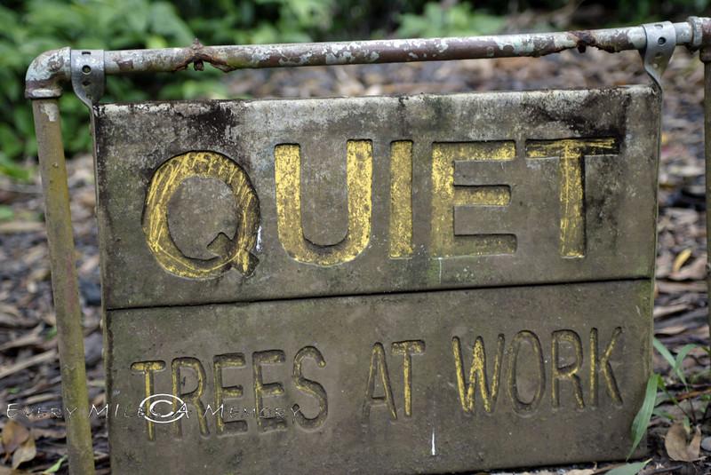 Quiet - Trees @ Work