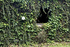 Hidden House covered in Ivy - Buffalo River Arkansas 2007