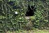 Hidden House covered in Ivy - Buffalo River Arkansas 2007