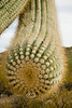 Spikey Arm of a Saguarro Cactus - Arizona 2007