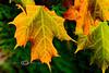 Fall Colors Close-up - Northern MI 2007