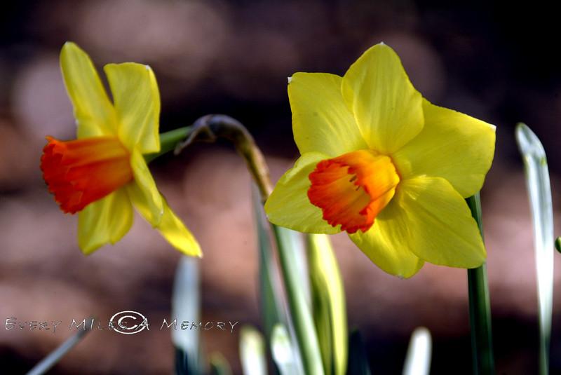 Spring Blooms - Georgetown South Carolina 2007