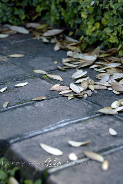 Fall Leaves in South Carolina 2007