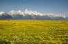 This is what I picture Heaven to look like - Grand Teton National Park 2008