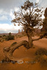 It's So Dry, the Trees Twist in the Desert - Moument Valley 2008