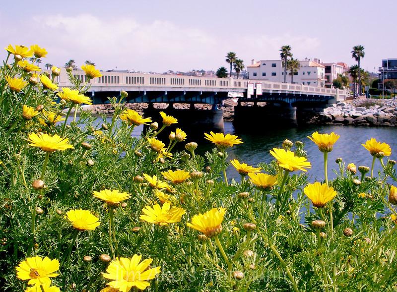 Playa Vista CA