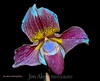 One of my favorite flowers is an Orchid.  They can be exquisite.