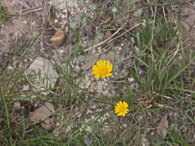 050810-12 wildflowers