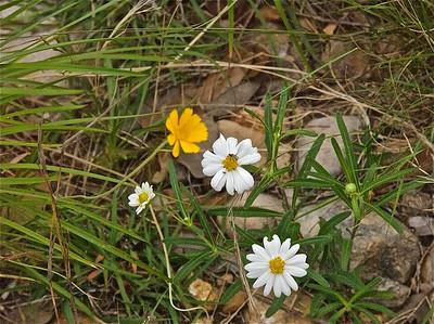 050810-23 wildflowers