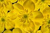 Yellow_NZ72195
