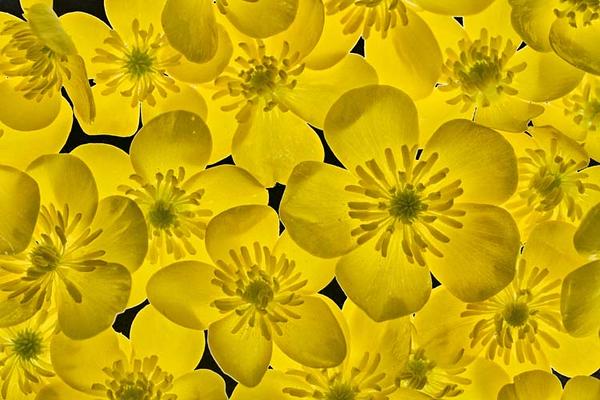 Yellow_NZ72127cm