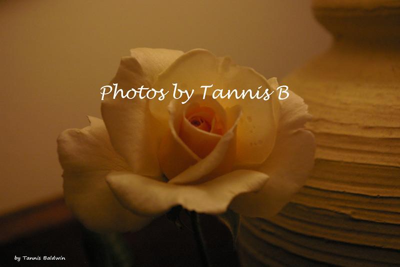 Rose-6435