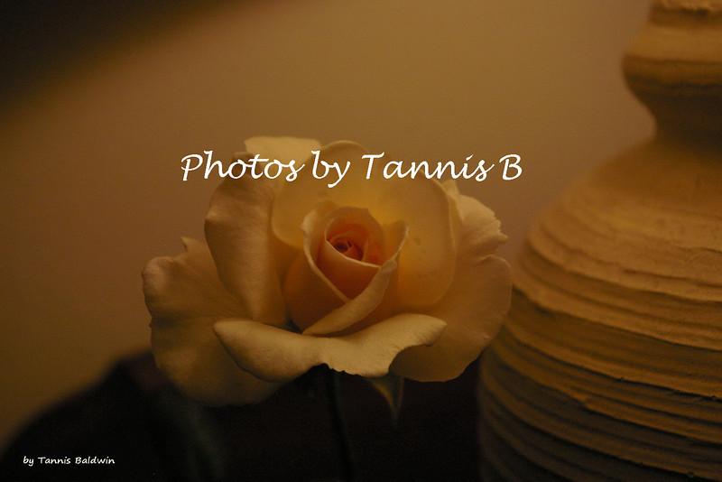 Rose-6436