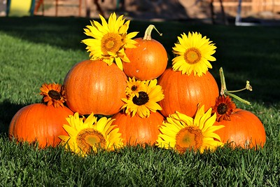 Fall Pumpkin Flowers