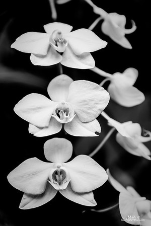 Orchid-28