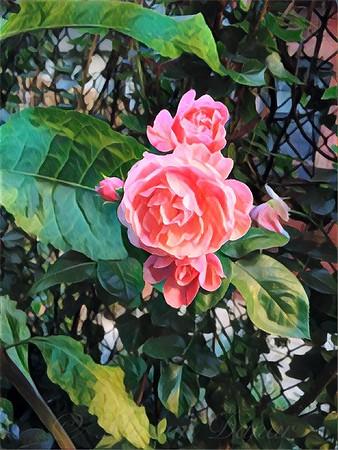 Prisoner of the City - Backyard Beauty Series - Flowers