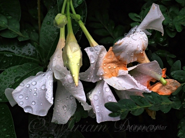 After the Rain - Flower Photography
