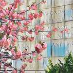 Swords Into Plowshares - Spring Flowers