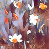 Promise of Spring - Orange and White Sundae