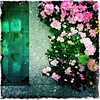 Pink and Green - the Waters of Rockefeller Center