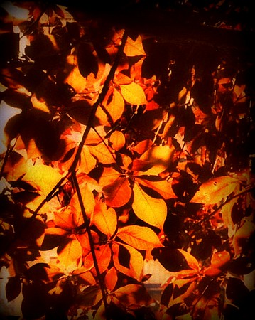Fiery Leaves of Autumn