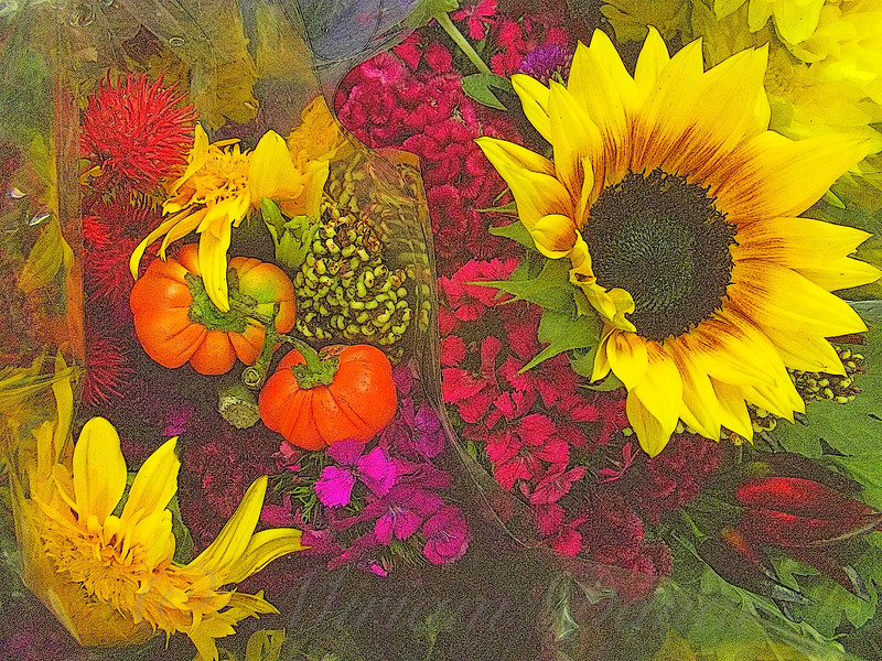 Flowers of Fall - Sunflower and Baby Pumpkins - cropped