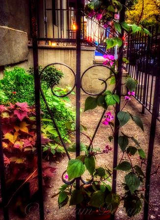 Pretty City Garden