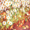 Dozens of Daisies - Happy Gardens of Spring