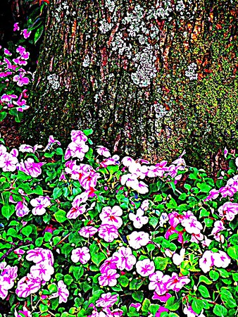 Pink Blossoms and Spongy Moss