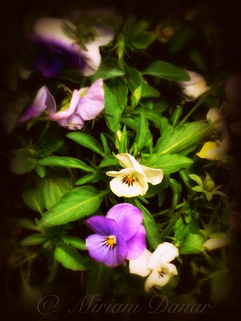 Delicate Blossoms - Flower Photography - New York City Outdoor Markets