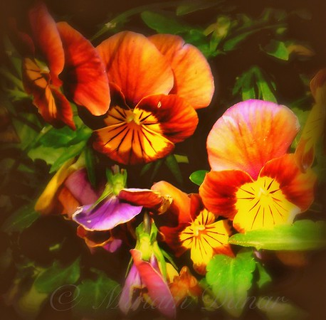 Sultry Nights - Flower Photography - New York City Outdoor Markets