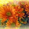 Flower Photography - Orange Beauty