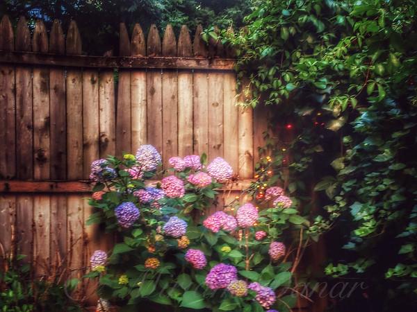Autumn Peace - Garden