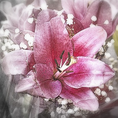 Pink on Silver - Flower Photography