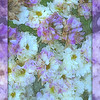 Purple and White Fantasy - Flowers of Spring - variation