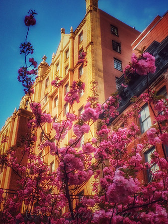 Springtime in New York - Pretty in Pink