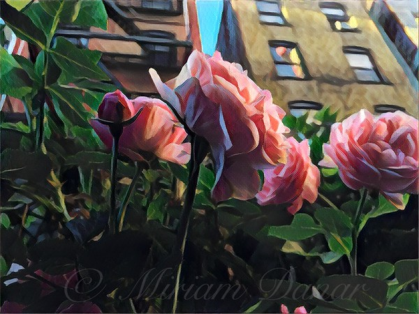 Spring in the City - Garden of Roses