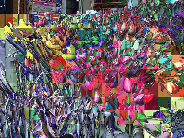 Tulips of Many Colors - Light Blue Tonality - New York City Outdoor Markets