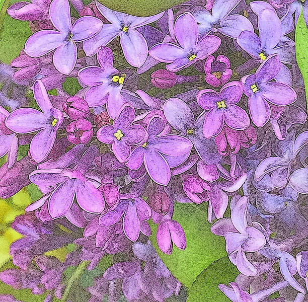 Spring Fantasy - Lilac Purple - variation