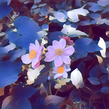 Lavender Blue - Flowers in the Shade