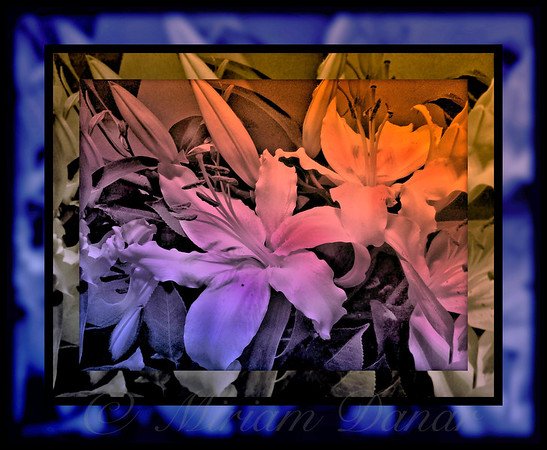 Twilight Delight - Stained Glass Series