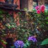 Paradise by the Backyard Gate - City Garden