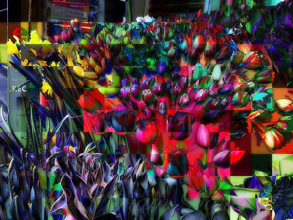 Tulips of Many Colors - Deep Blue Tonality - New York City Outdoor Markets