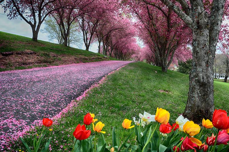 Pink Road