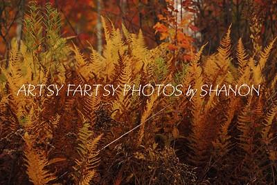 fall fernes (1)