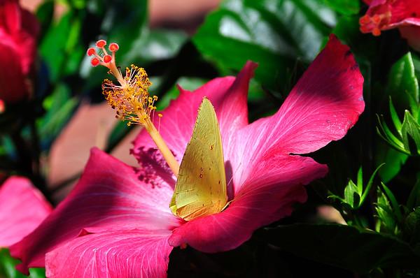 Hibiscus Hideaway