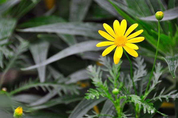 Golden Wildflower