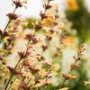 Edmonds Flowerings